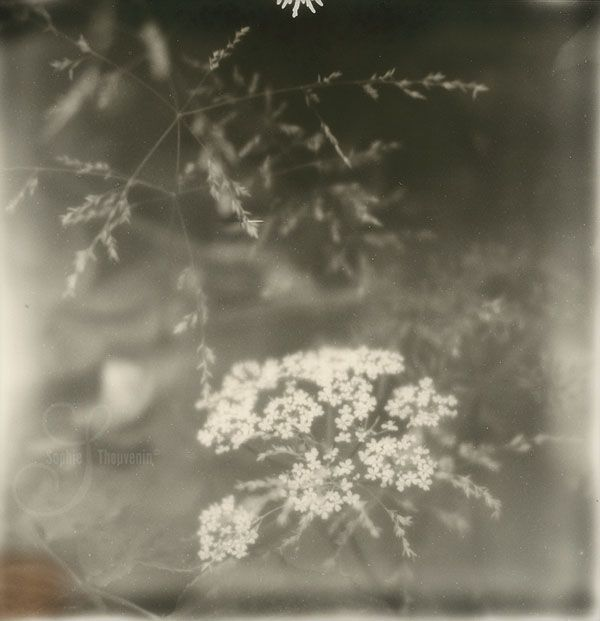 fragile things © sophie thouvenin - http://www.prismes.net