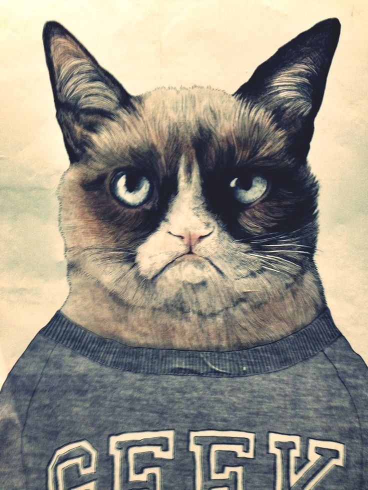Grumpy cat in the Subway station