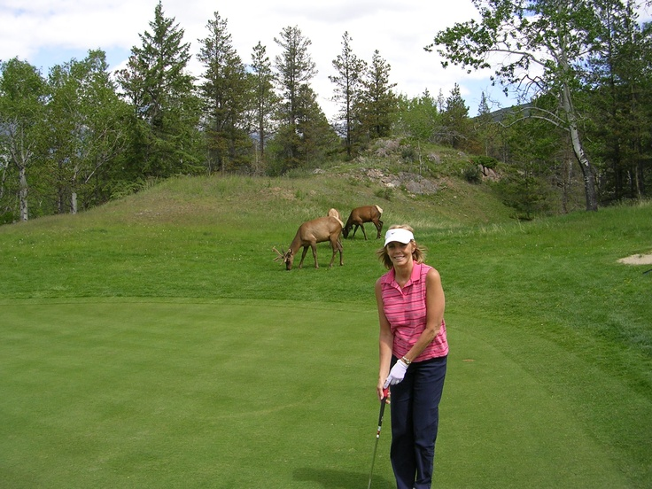 Two elk join us on the green at Jasper Park CC, Alberta, Canada.