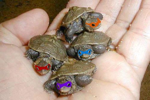 mini ninja turtles! haha