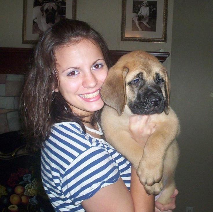 Great Dane Puppies For Sale In Cincinnati Ohio Ideas