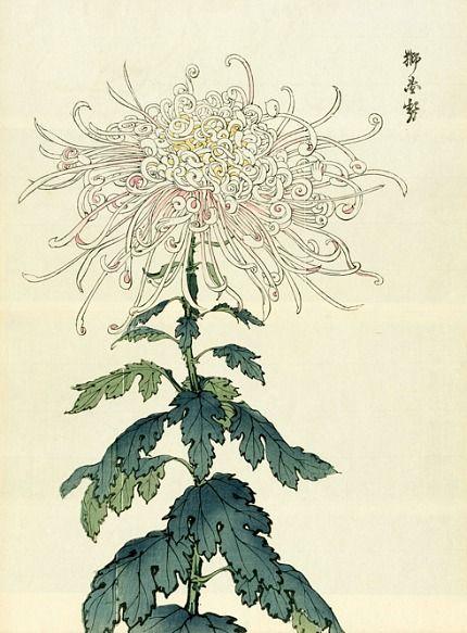 Keika Hasegawa, woodcut