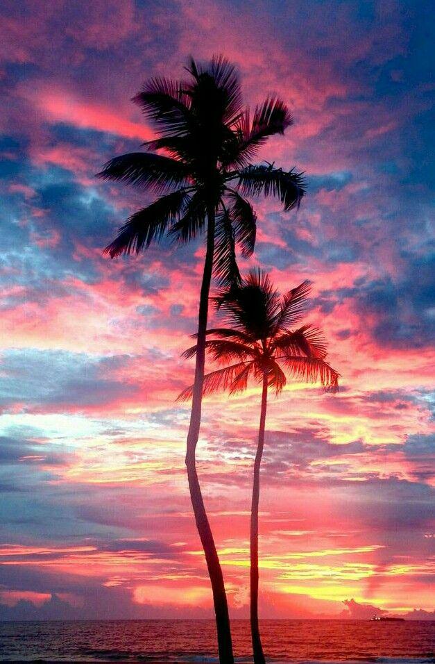 Pinterest Cosmicislander Tree Wallpaper Iphone Palm Trees
