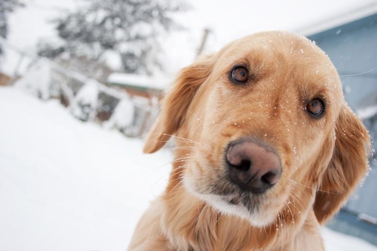 49 best pet grooming tips images on pinterest pet grooming your winter can bring dandruff hartz solutioingenieria Gallery