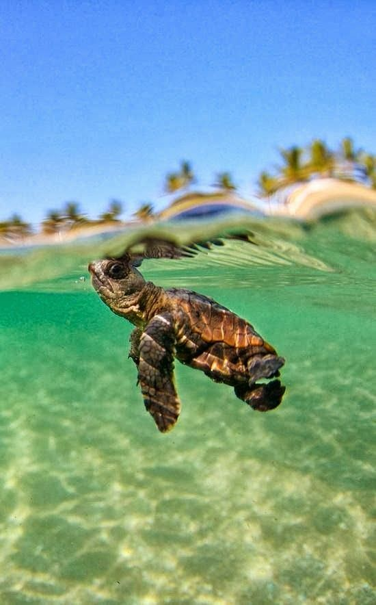 It's a Baby Turtle