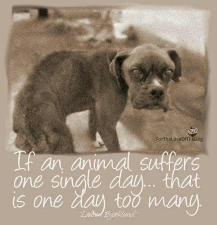 Sad Animal Cruelty Quotes