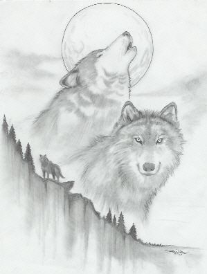 sketches of wolf   Cool Drawings Of Wolves Wolf sketch by