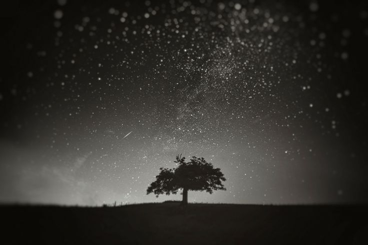 Photo ѱ Trust your heart by Andy Lee on 500px