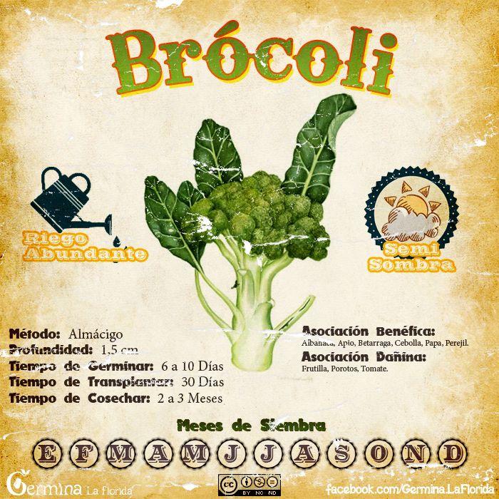Brocoli.jpg (700×700)