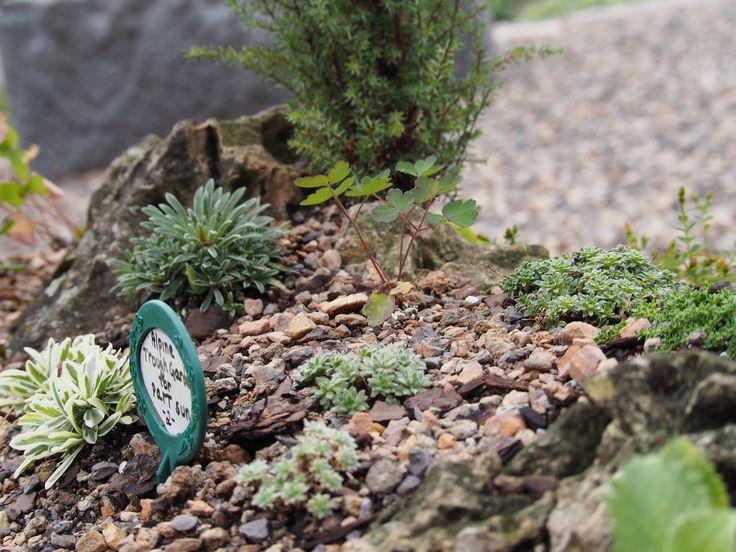 Garden Ideas For Minnesota 578 best public gardens on pinterest images on pinterest | public