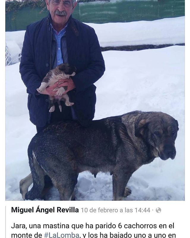 Baja a sus cachorros para que no mueran de frío...  #Difunde en #LealesOrg una #adopción y #adopta o sé #acogida para #AdoptaNoCompres O un #SeBusca de #perro o #gatos; #perdido o #ENCONTRADO para #NoAlMaltratoAnimal  https://www.instagram.com/p/BfJAcy6BXeD/ https://scontent.cdninstagram.com/vp/99f7b143f206a1bf9b74da2d45c92a06/5B131F5E/t51.2885-15/sh0.08/e35/p640x640/27578716_405990363171213_8841521801830858752_n.jpg