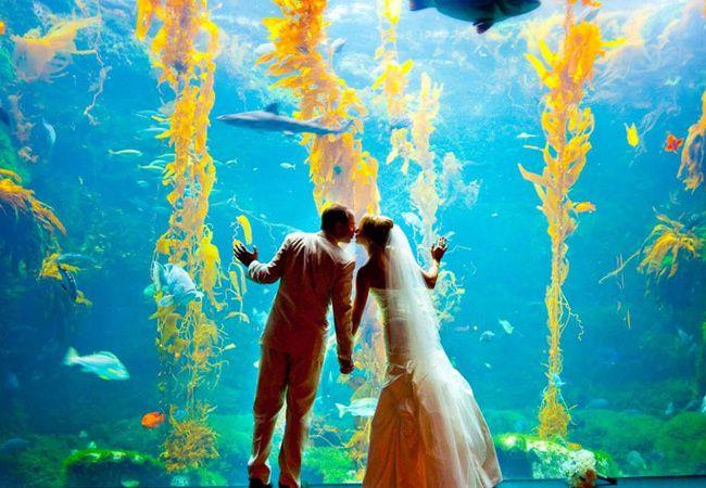 Aquarium Wedding photo inspiration