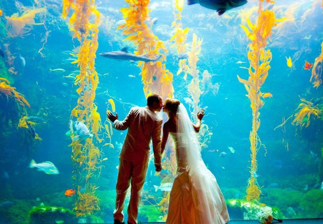 Aquarium Wedding photo inspiration