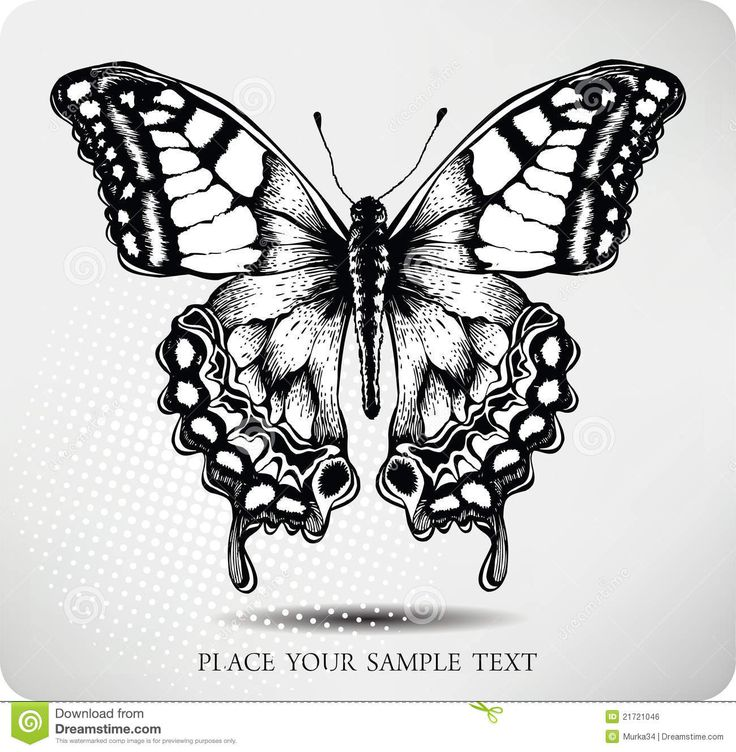 Line Drawing Butterfly Tattoo : Ideas about butterfly drawing on pinterest how to