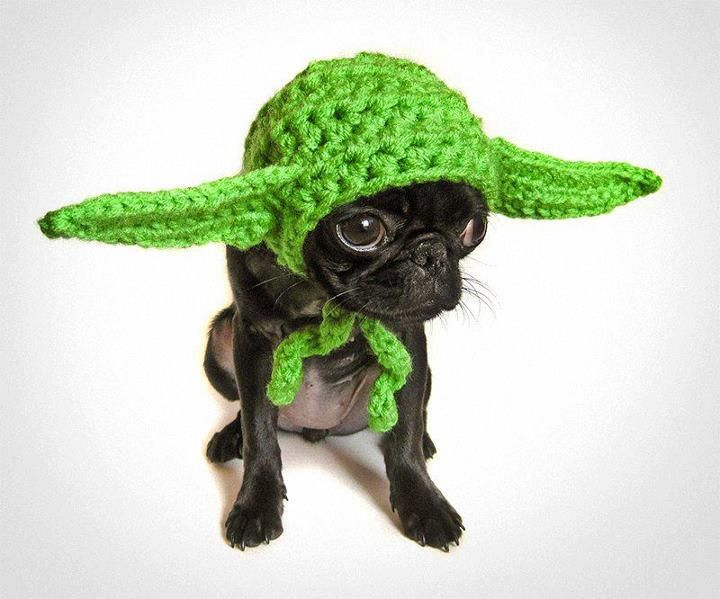 May The Force Be With You  :D   HA HA HA HA!!   SOOOO CUTE!!Hats, Halloween Costumes, Dogs Costumes, Pets, Yoda, Costumes Halloween, Stars Wars, Wars Dogs, Animal