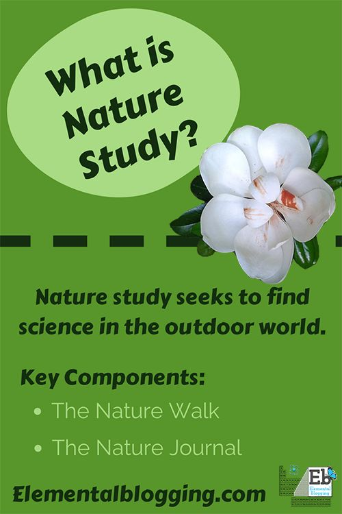 Nature study teaches the students to slow down and really see the science surrounding them.