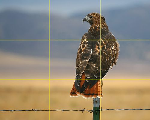Does this photo meet the rule of thirds'''