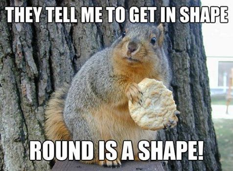 Round is a shape funny memes meme lol cute. humor funny animals squirrell funny quotes