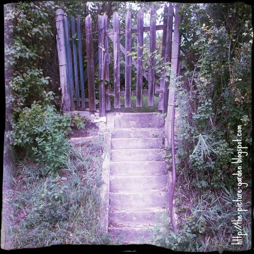 The Picture Garden: Project 365 - Day 253