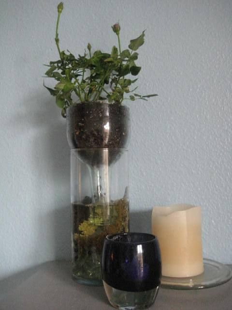 self watering planter out of wine or other bottles