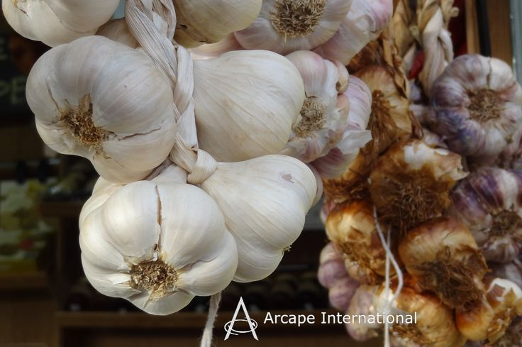 The world's 5th largest producer of garlic is Spain.  The main growing regions of garlic are Andalusia, Castile-La Mancha and Castile-Leon.