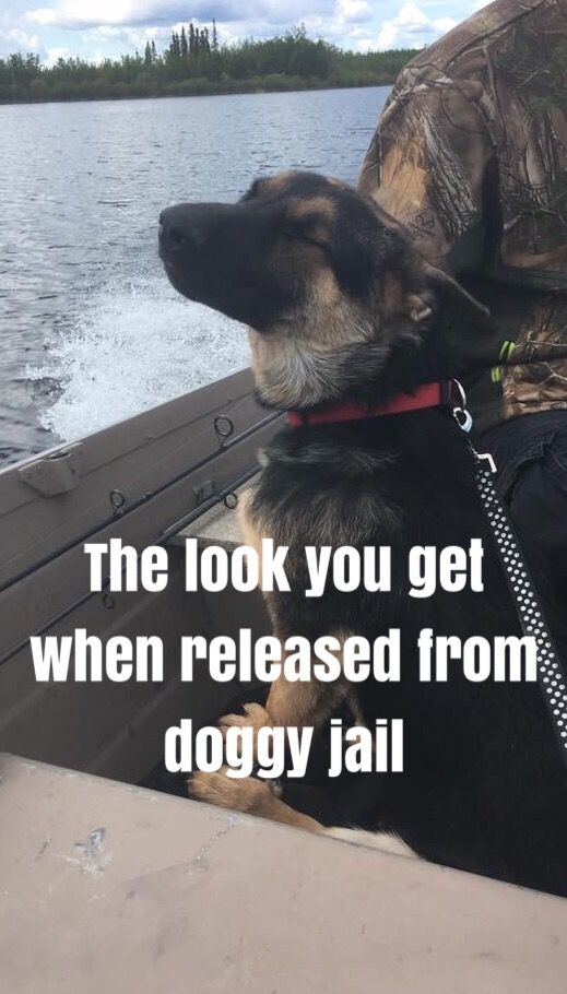 GSD puppies make adorable pictures!