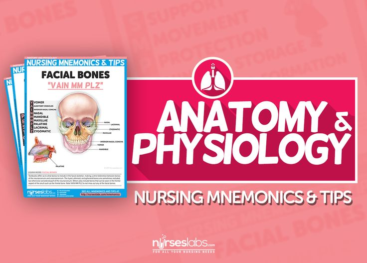 56 best School images on Pinterest   Nursing, Human anatomy and ...