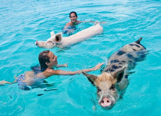 Pig Beach An Island Run By Swimming Pigs In The Bahamas When On Earth Places To See Things Do Gear Get Craig S Fitness Pinterest Travel