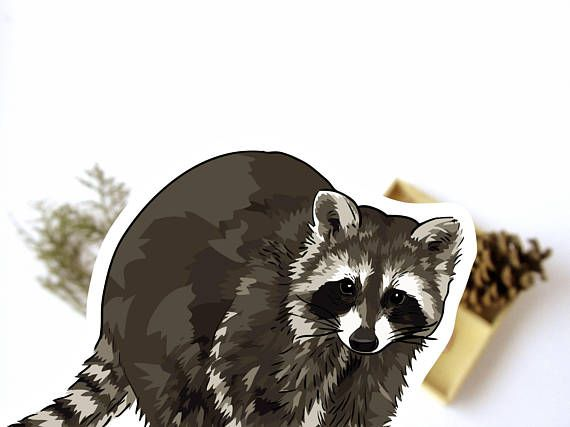 Raccoon sticker set great for woodland animal lovers to decorate notebooks and joournals