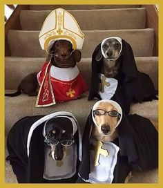 Happy Halloweenie! #costume #halloween #dachshund
