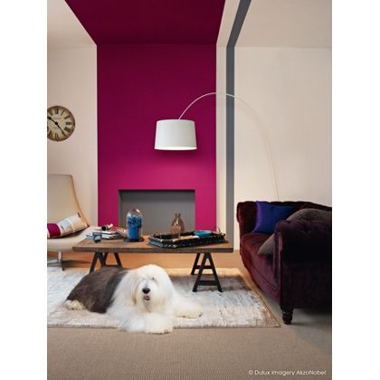 Dulux Feature Wall Sumptious Plum