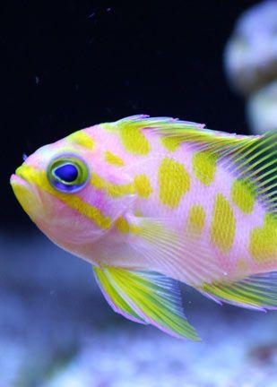 Bijzonder kleurrijke vis