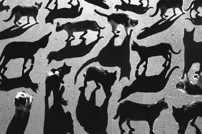Shadow CatsPhotos, Shadows Cat, Cat Shadows, Shadows Photography, Art, Alexey Bednij, Alexeybednij, Black Cat, Animal