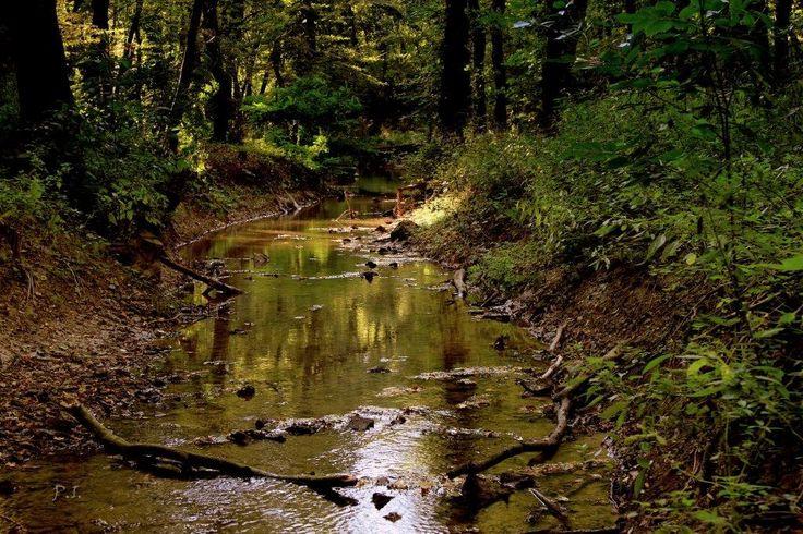 """Dr. Pálffy István  Gaja- patak """"Amikor az erdőn jársz, és rábukkansz valahol egy forrásra, ülj le melléje csöndesen és figyelj. Nagyon csöndes légy, és akkor hallani fogod a zöld ruhás tündérke hangját a surranó vízből. Ha pedig jó füled van, és érted az erdő nyelvét, akkor meghallhatod azokat a csodaszép meséket, amiket a forrás, a csermely, a patak tündére elmond ilyenkor a fáknak."""" Wass Albert Több kép Istvántól: www.facebook.com/palffydr/photos_albums"""