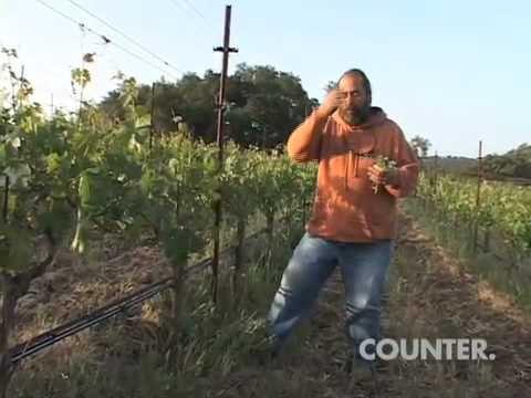 Phil Coturri of Enterprise Vineyards discusses the organic vineyard growing practices at Kamen Estate Winery, Sonoma Valley.