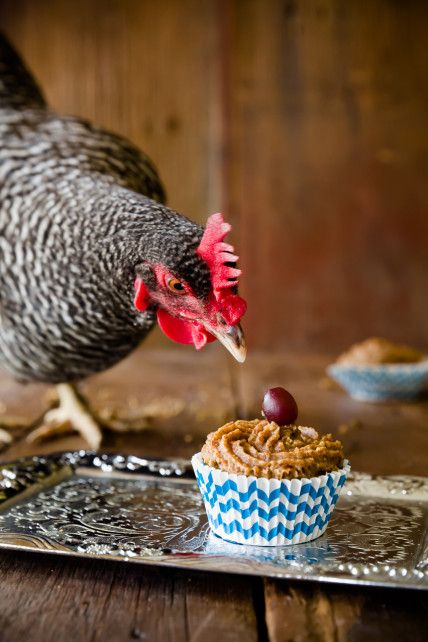I Am Now the Crazy Lady Who Makes Cupcakes for Her Chickens | Cupcake Project ... Now I've seen it all! LOL