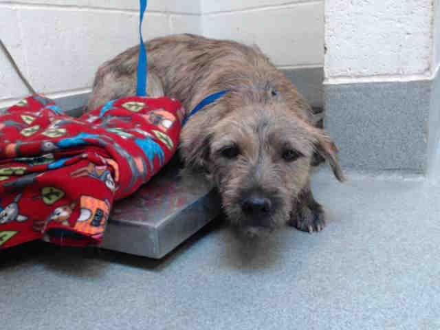 Meet Andrea A Dog At Albuquerque Animal Welfare Westside On