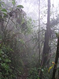 Selva Humeda, Farallones de Cali Valle del Cauca, único