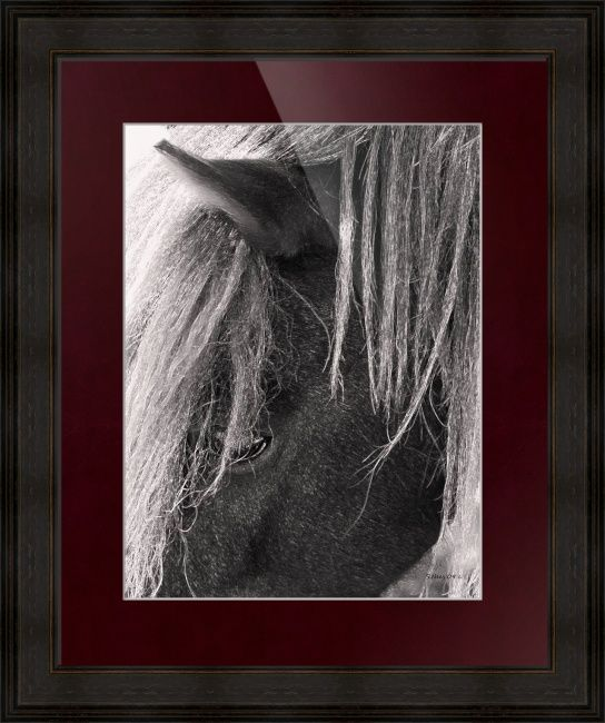 """""""Theia  Miniature Horse"""" by Shari Nees, Milford, VA // I like things Black and white, it is something a little different in today's world of all color. Normally I do Graphite's/charcoal or Pen and Ink to get my Black and White fix and rare times I will take a Black and white photograph.Here is something just a little different I... // Imagekind.com -- Buy stunning fine art prints, framed prints and canvas prints directly from independent working artists and photographers."""
