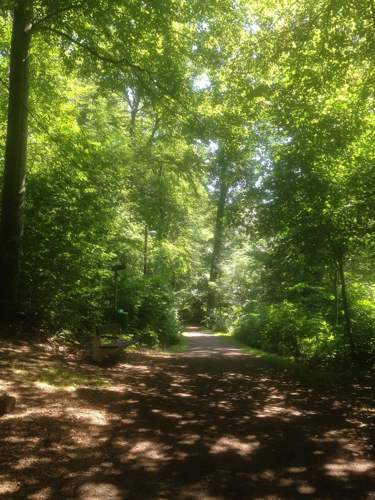 Ramlösa skog