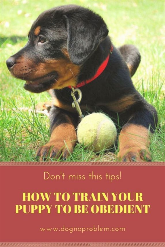 Dog Training Aggression Therapy Dog Training Near Me Best Dog