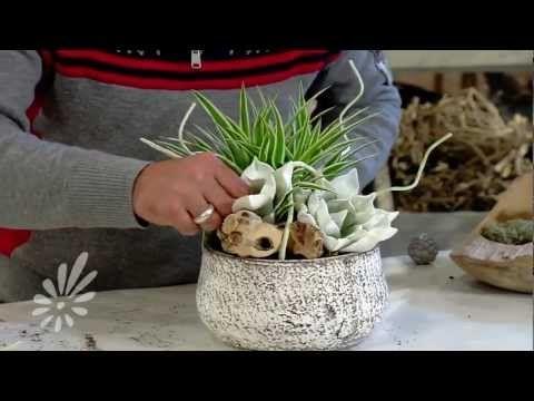 ▶ Plantenarrangement opmaken met Romeo Sommers - YouTube