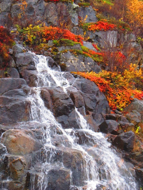 The Freshness of Arctic Stream and glow of 'Ruska' / Fall Colors In Utsjoki Lapland, Finland.