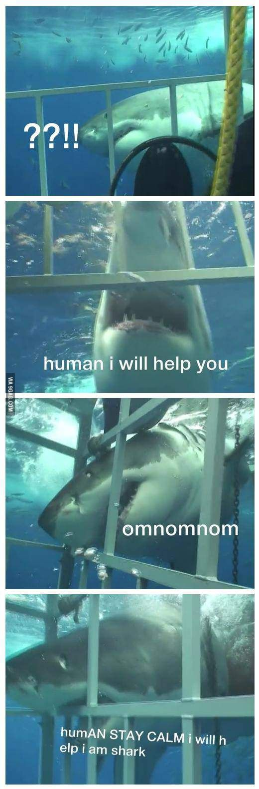 Human why are you in cage? Why are pictures of sharks with witty captions so funny to me?