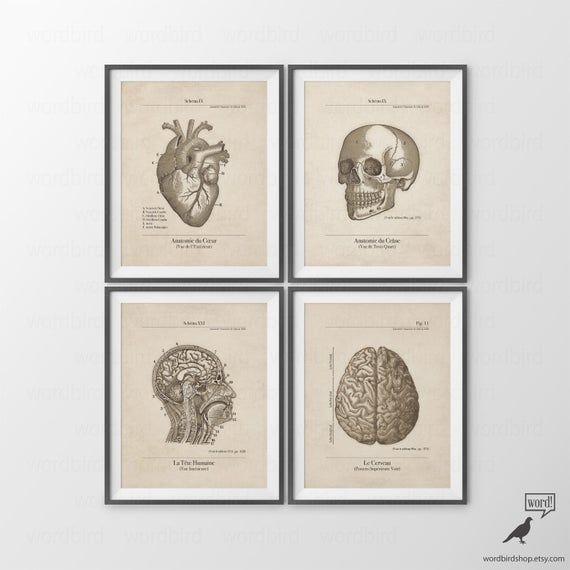 VINTAGE COLOURED SKULL DIAGRAM MEDICAL ART PRINT Poster Wall Chart Illustration