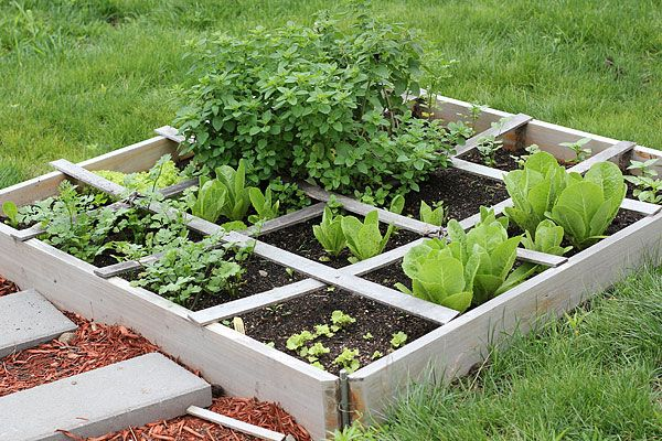 25 best ideas about rabbit food on pinterest rabbits bunny care and pet rabbit - Container gardening for beginners practical tips ...
