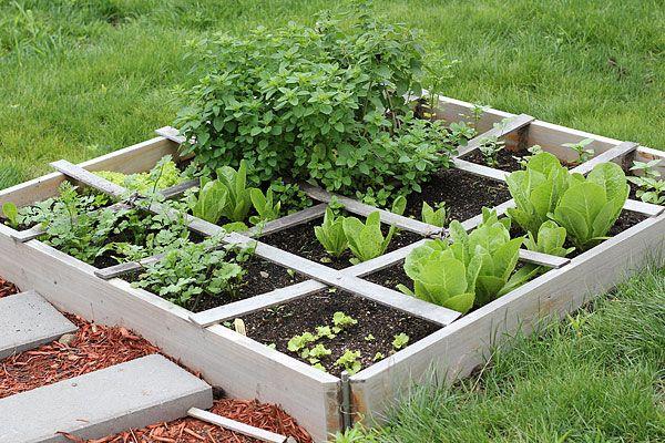 organic greens, container gardening, indoor plants, vegetable garden
