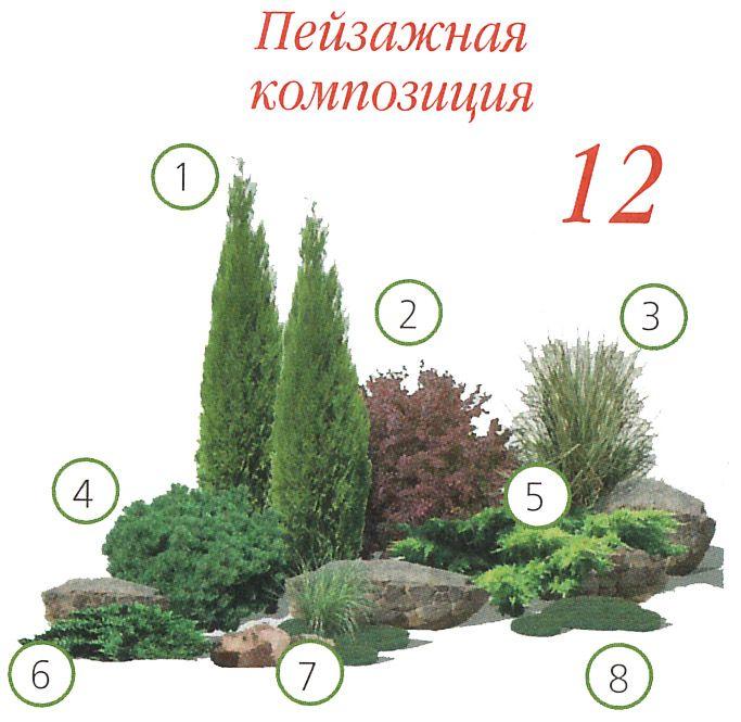 """1. Туя западная """"Holmstrup"""" 2. Барбарис тунберга """"Red Chief"""" 3. Мискантус китайский """"Zebrinus"""" 4. Сосна горная """"Mops"""" 5. Можжевельник средний """"Old Gold"""" 6. Можжевельник казацкий """"Tamariscifolia"""" 7. Осока Моррова (или аналогичные злаки) 8. Почвопокровные многолетники """"Мшанка или очитки"""""""