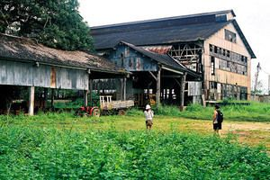 Henry Ford's abandoned rubber plantation