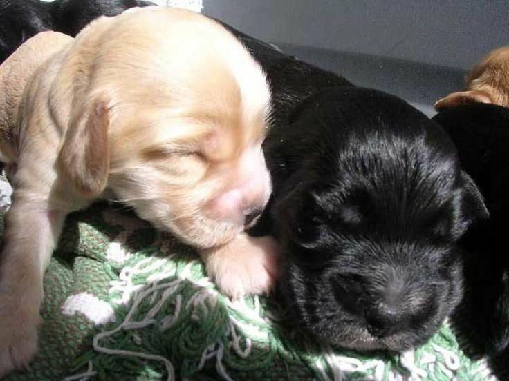 Dermatitis atópica canina: tratamientos para la piel de tu mascota